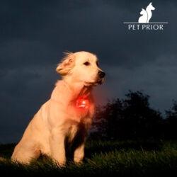 Kutya LED Biléta Nyakörvre
